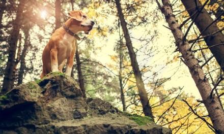 Die Instinkte eines Hundes