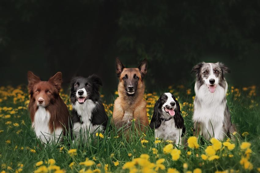 Die häufigsten Verhaltensweisen des Hundes