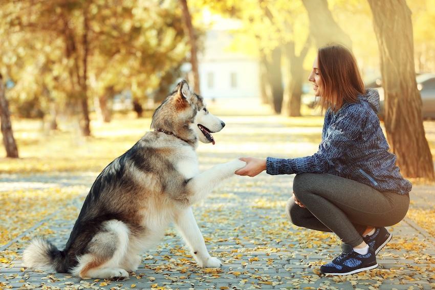 Hunde folgen deiner Energie