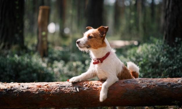 Hunde folgen ihrem Instinkt