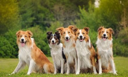 Hunde sind Rudeltiere